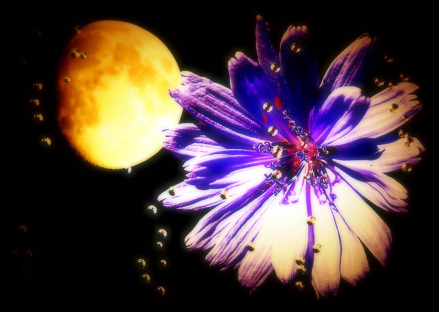 Mondblume