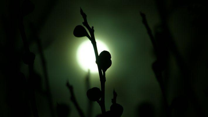 Mondfeigen