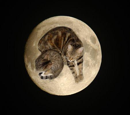 Mondkatzen