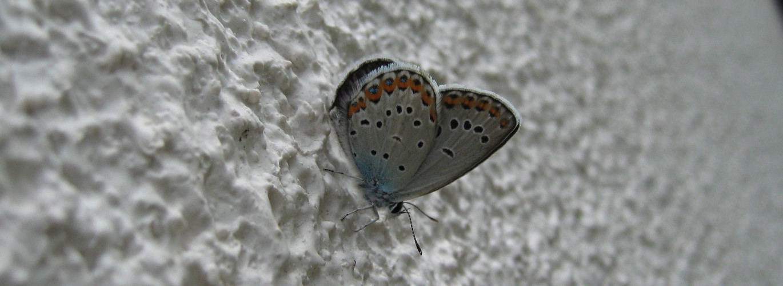 Mondlandschaft ?....mit Schmetterling
