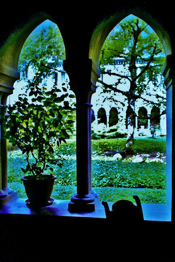 Mondlicht in den Gärten
