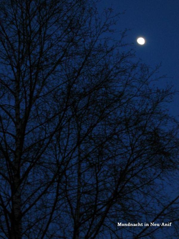 Mondnacht in Neu-Anif