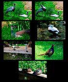 Mondo Verde - Bewohner des Parks