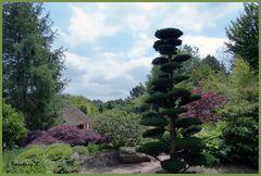 Mondo-Verde - Japanischer Garten
