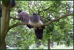 Mondo-Verde - Vögel-Rast auf dem Baum