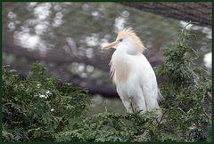 Mondo-Verde -  weißer Vogel
