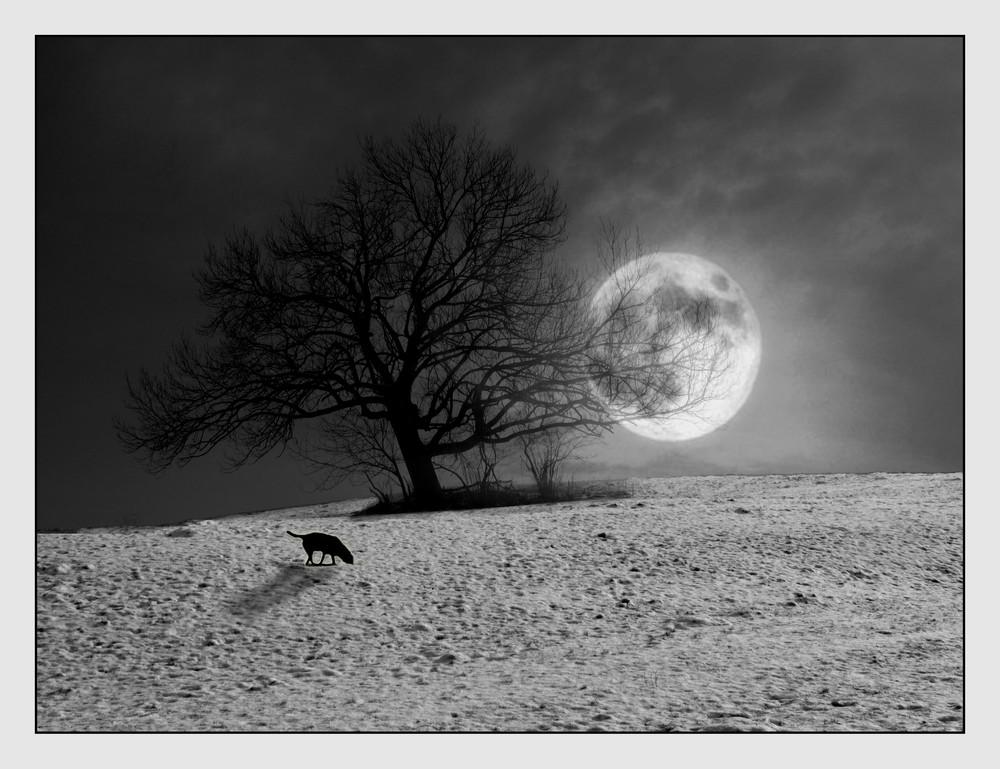 Mondscheinspaziergang