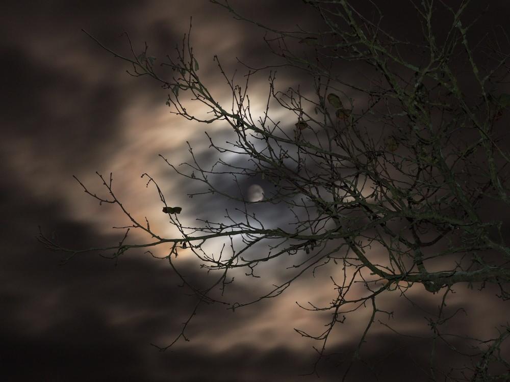 Mondtag
