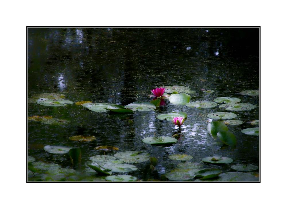 Monet für Arme ;-))