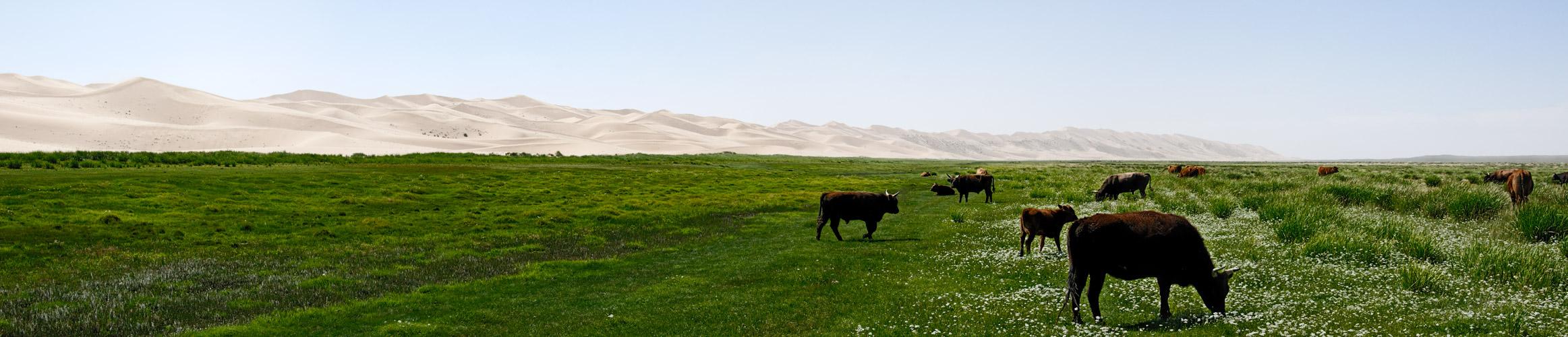 Mongolei-Khongoryn Els 4