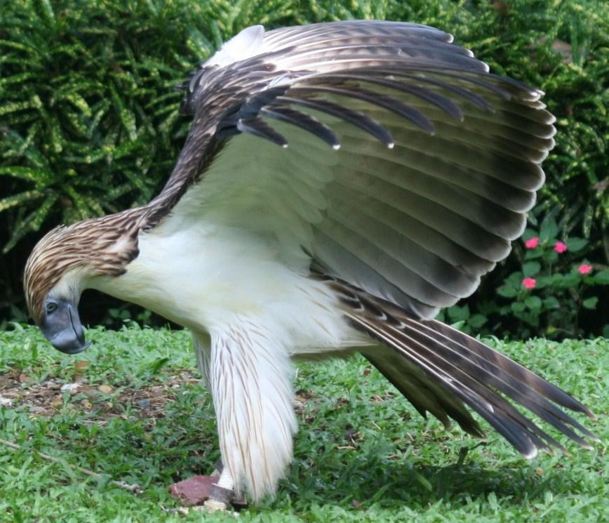 monkey eating eagle