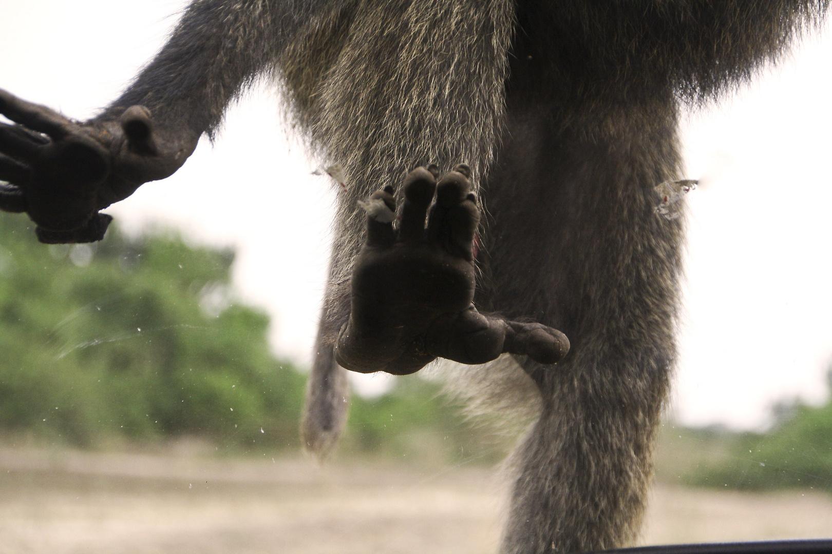 Monkey on bord