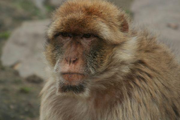 Monkey portrait.