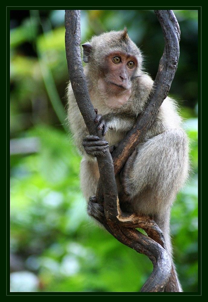 Monkey Temple I