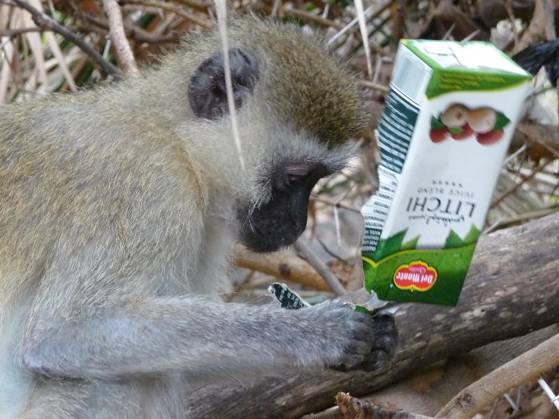 Monkey with Litschi Juice
