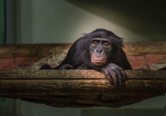 Monkey#2