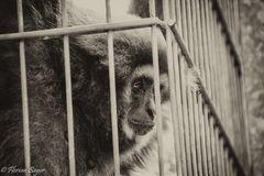 Monkey_locked