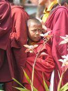 Monks in Karmapas Garden