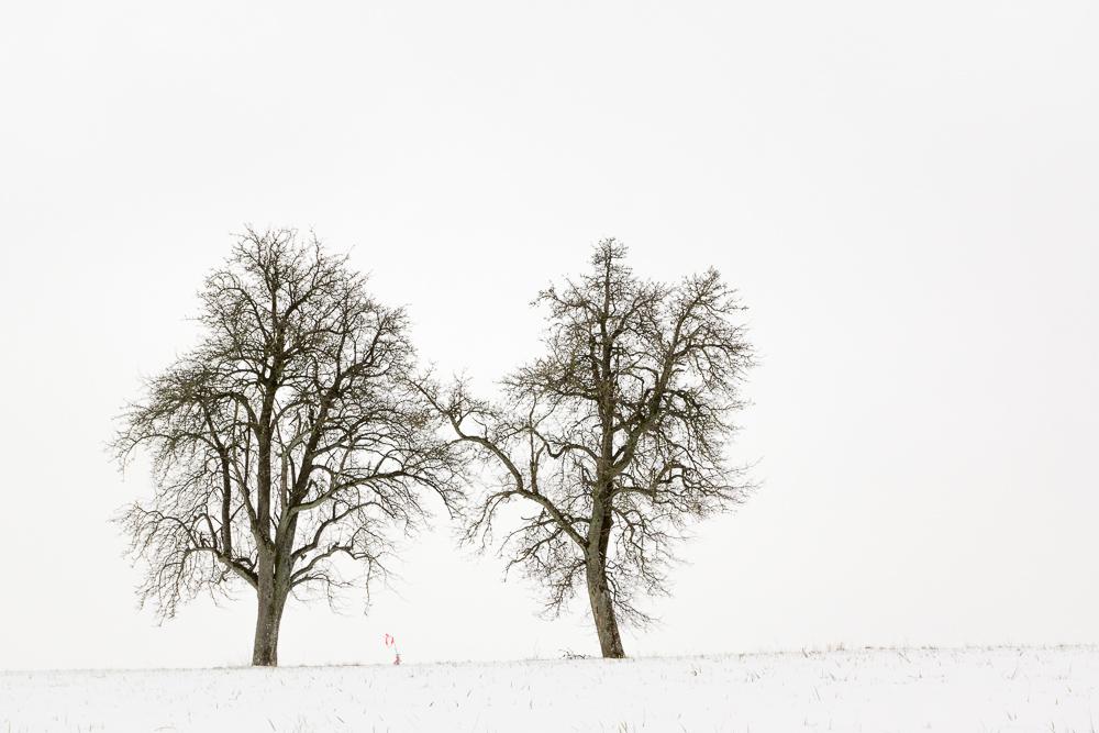 monochrome Winterlandschaft in Farbe