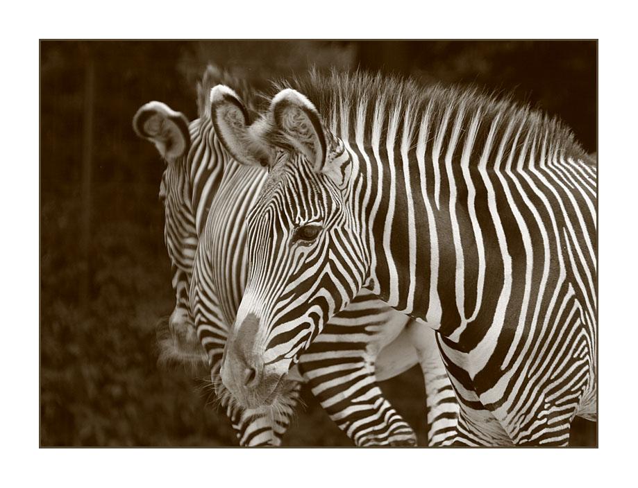 Monochromes Tier