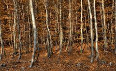 monofärbiges herbstliches unterholz