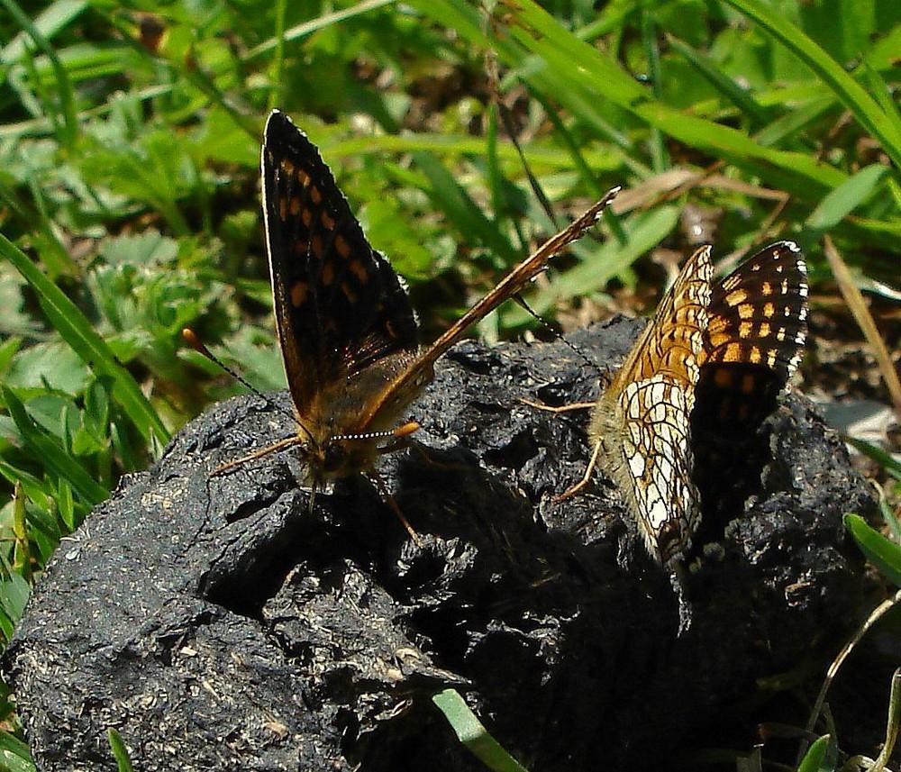 Monsieur et Madame Papillon sont de sortie