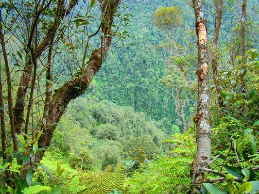 Montaña de Honduras