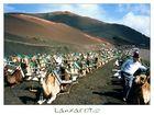     Montañas del Fuego     Dromedarritt     #4