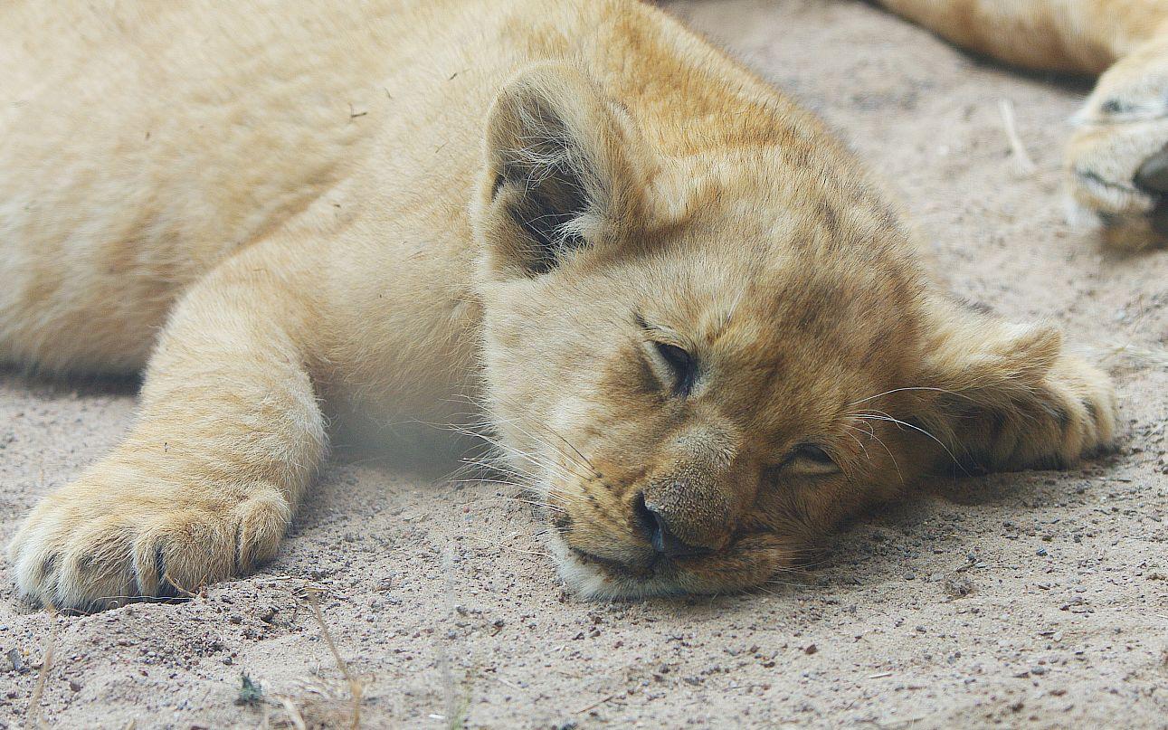 montag geschafft foto bild tiere zoo wildpark falknerei s ugetiere bilder auf. Black Bedroom Furniture Sets. Home Design Ideas