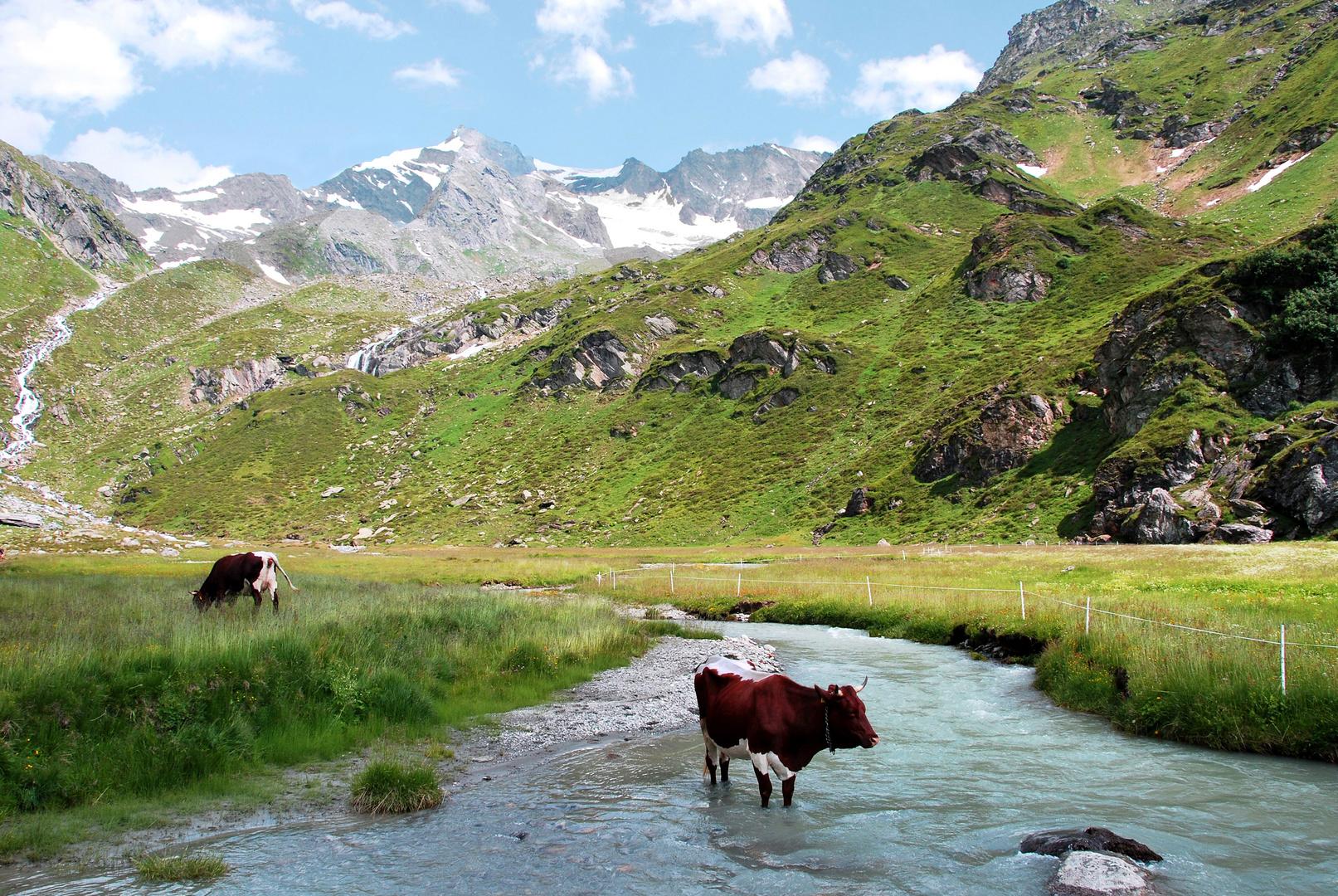 Montagne -.49 - Hot summer