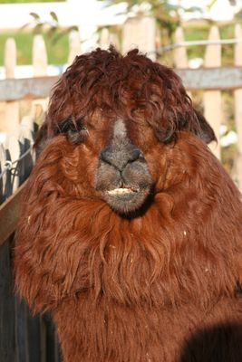 Montags im Zoo - Friseurtermin