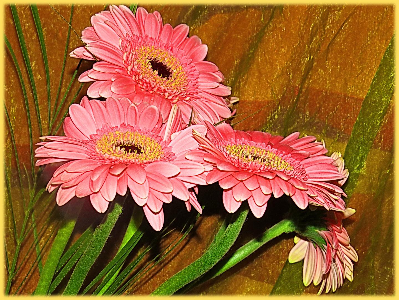Montagsblume - immer wieder schön