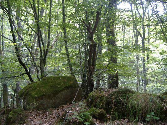 Monte Hijedo. Cantabria