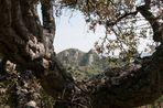 Monte Petrapizzuta con cornice di vecchio sughero.