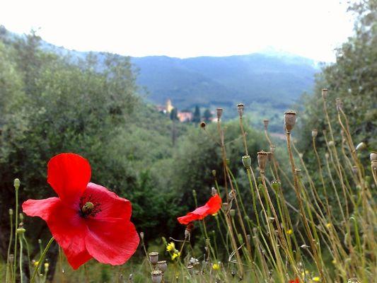 Montemagno Calci