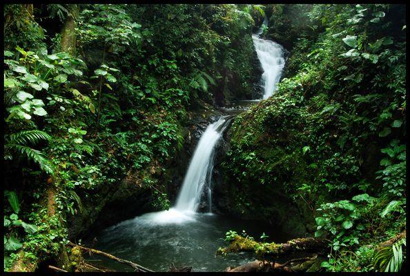 monteverde stream