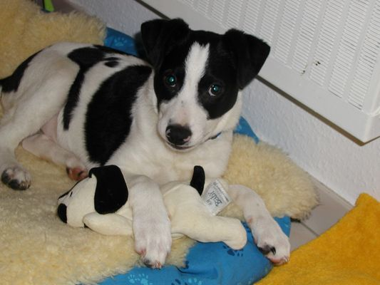 Monty 13 Wochen alt