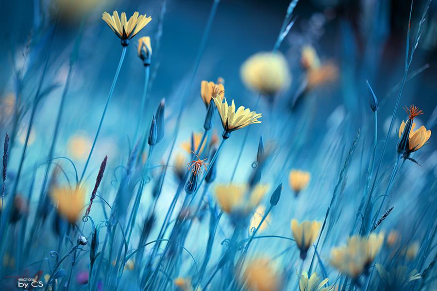 *** moon-flowers ... ***