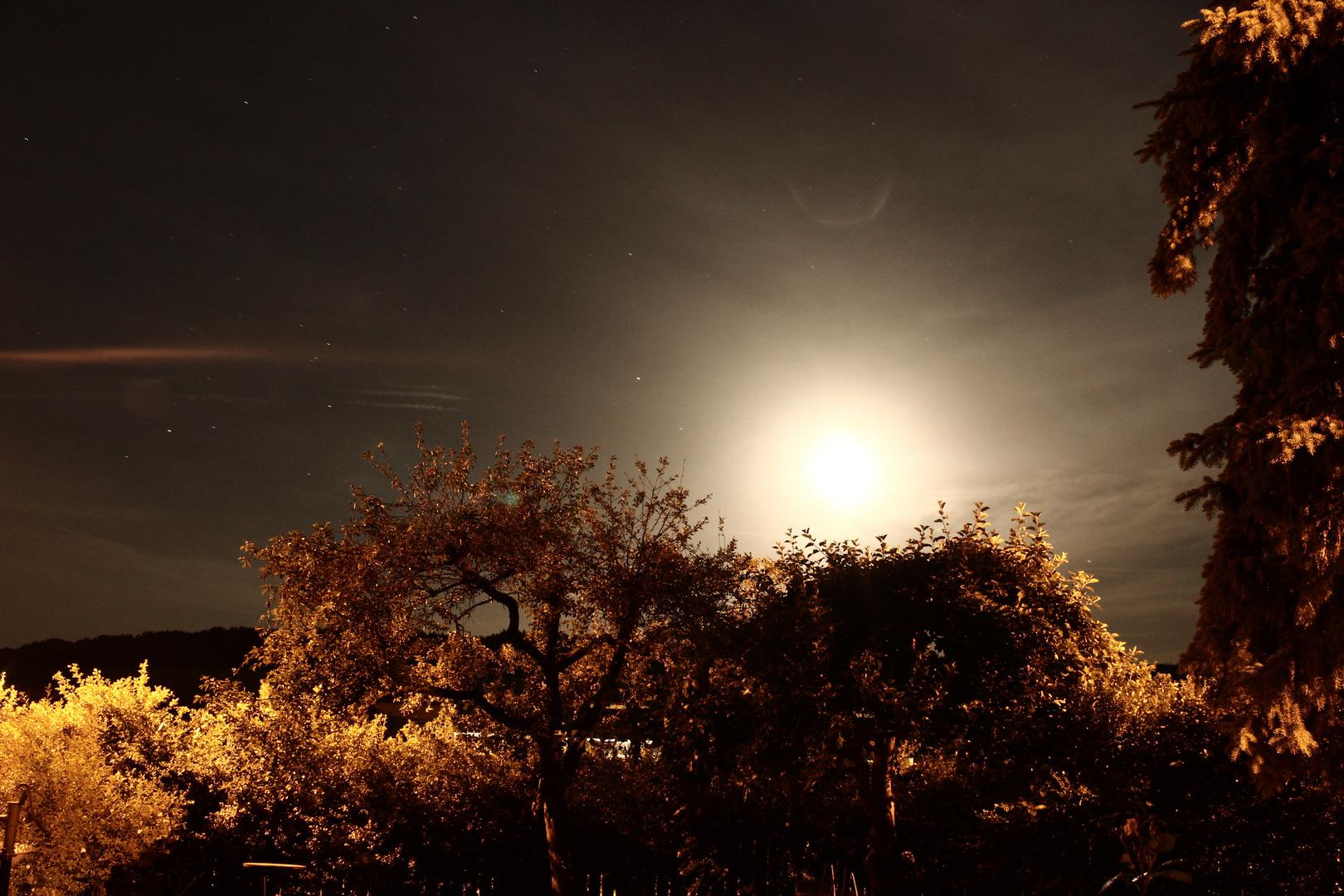 Moon in the Garden