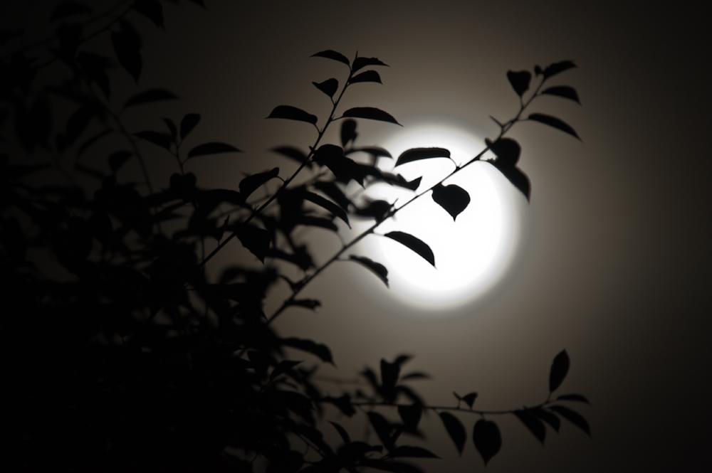 Moon is rising ...