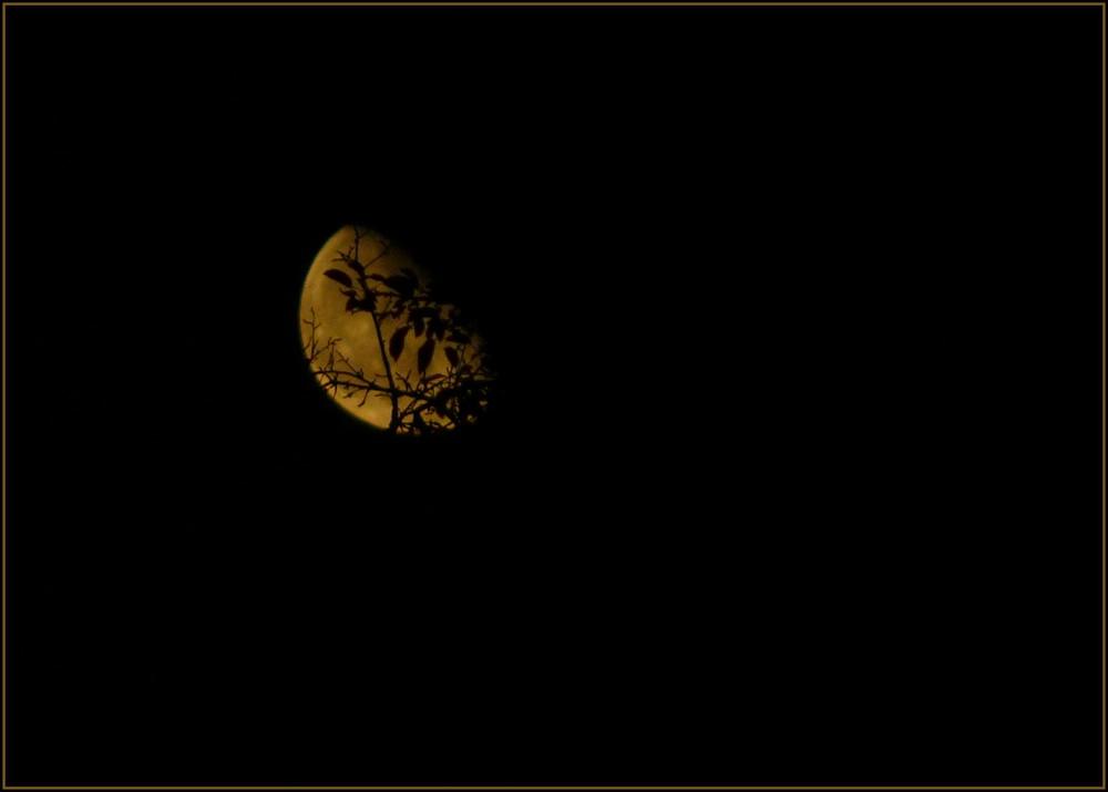 moon light shadow