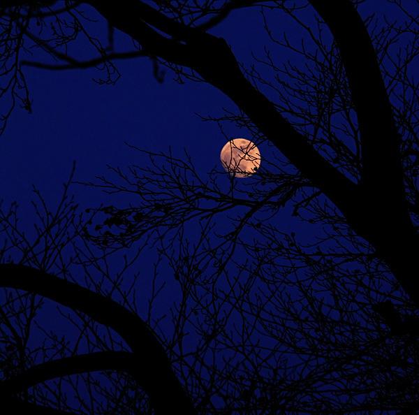 moon under trees