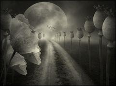 moonlight,,,,