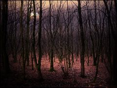 Moonlight,,,