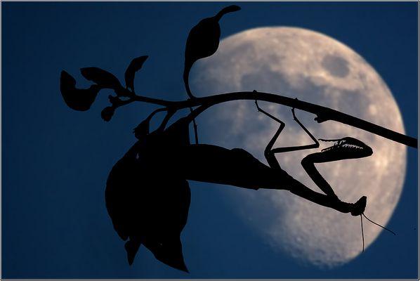 >>Moonlight Killer<<