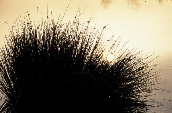 Moor im Herbst