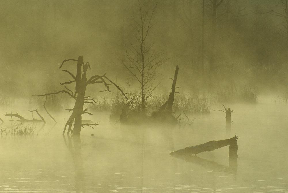 Moor im Nebel (Schwenninger Moos)