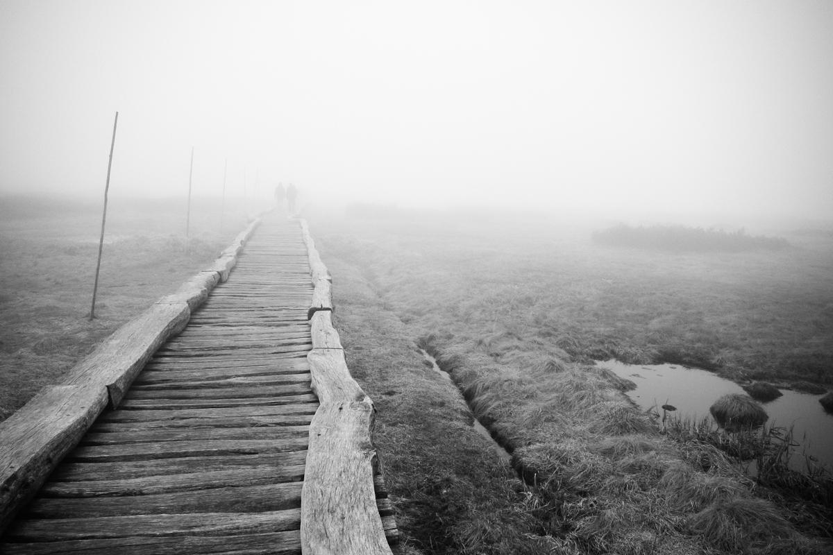 Moor im Riesengebirge (Krkonose)