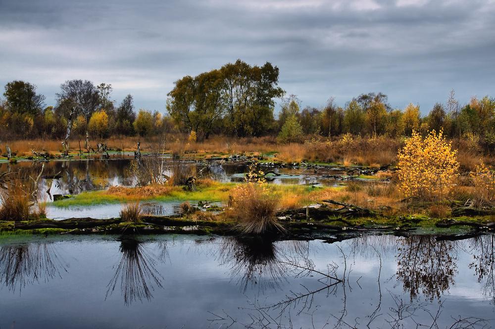 Moor-Landschaft