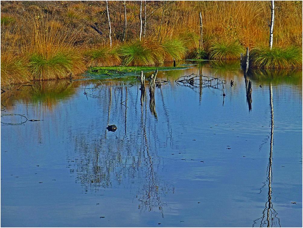 Moor Silberborn im Solling